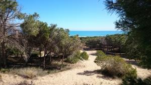 001 Playa Guadamarklein